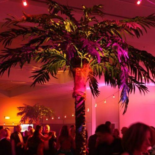 360cm Palm Tree