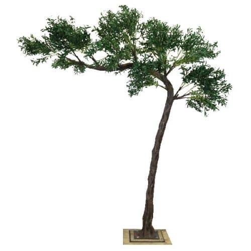 3.2m Canopy Olive Tree