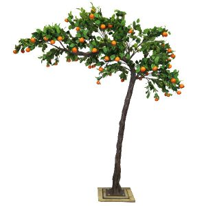 3.2m Canopy Orange Tree
