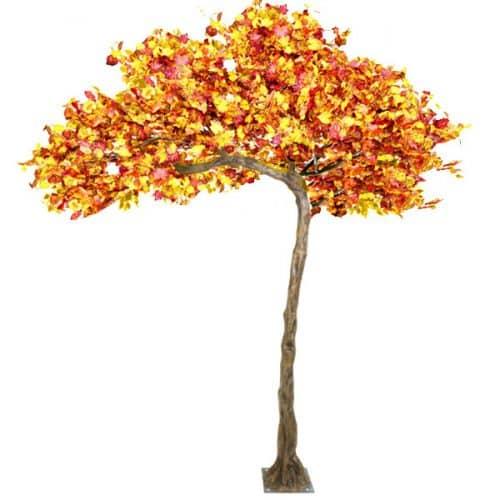 3.2m Canopy Autumn Tree