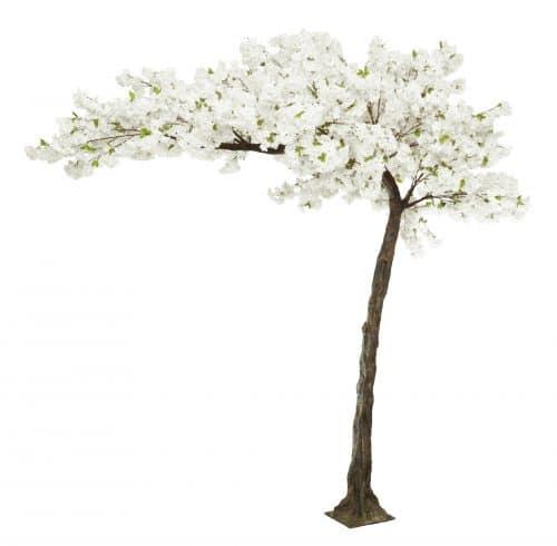 3.2m Canopy White Blossom Tree