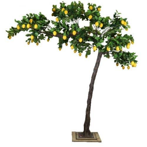 3.2m Canopy Lemon Tree