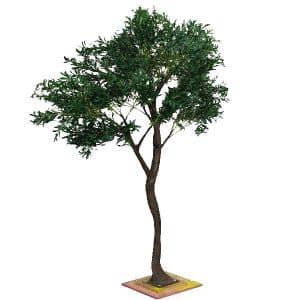 3m Olive Tree