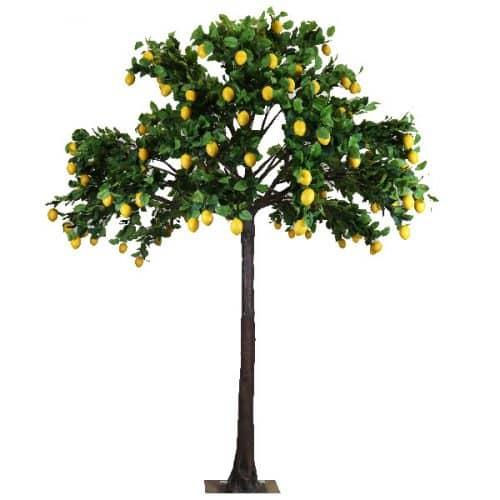 4m Lemon Tree