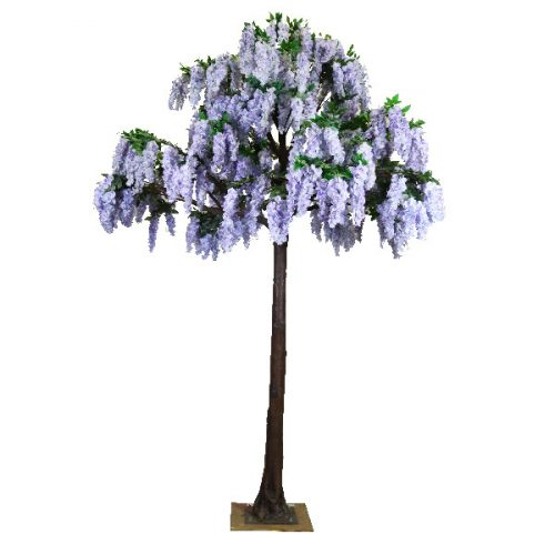 4m Lilac Wisteria Tree