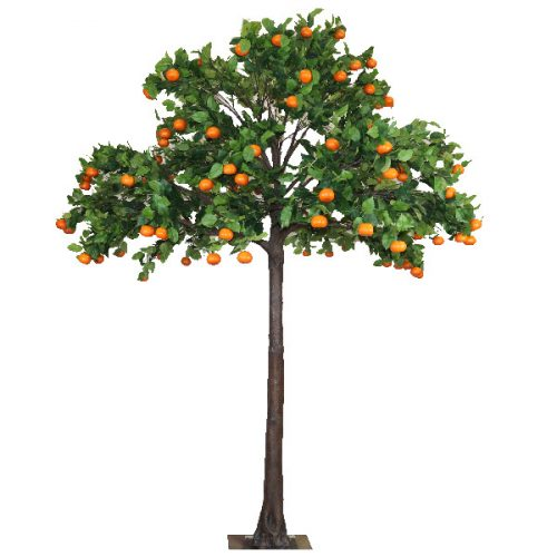 4m Orange Tree