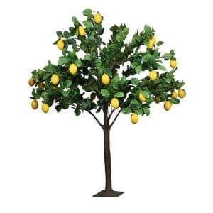 6ft Lemon Tree