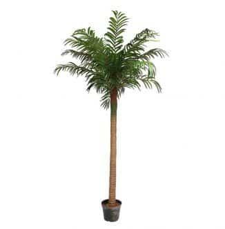 240cm Palm Tree