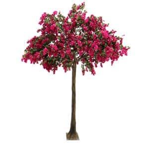 4m Bougainvillea Tree