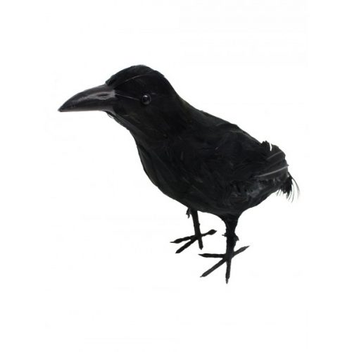 Small Crow