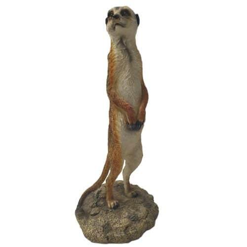 Meerkat Prop