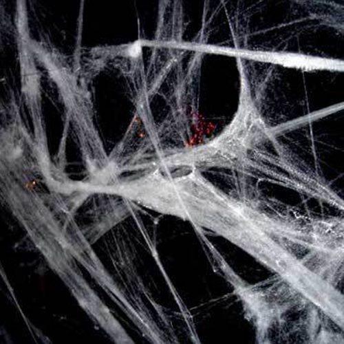 Spider Web 400 SQF