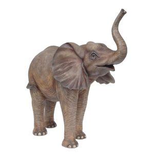 Baby Elephant Standing
