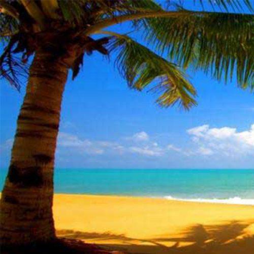 Tropical Beach Backdrop