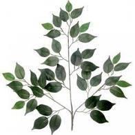 Green Leaf Sprig