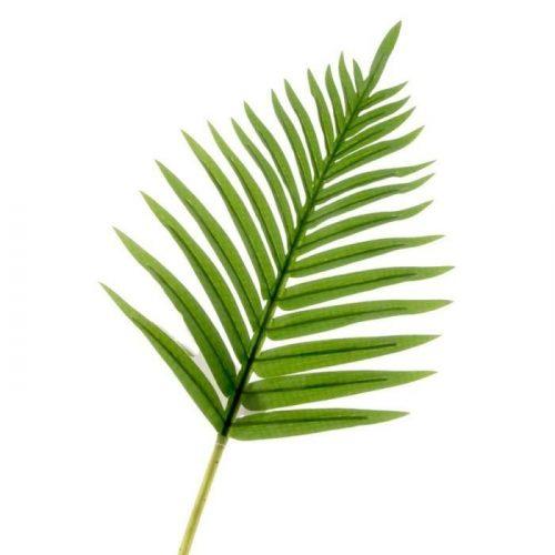 Palm Leaf Stem
