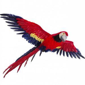 Parrot Prop Flying
